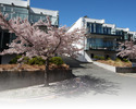Queenstown-Accommodation Per Room travel-Blue Peaks Apartments Queenstown-2 Bedroom Apartment